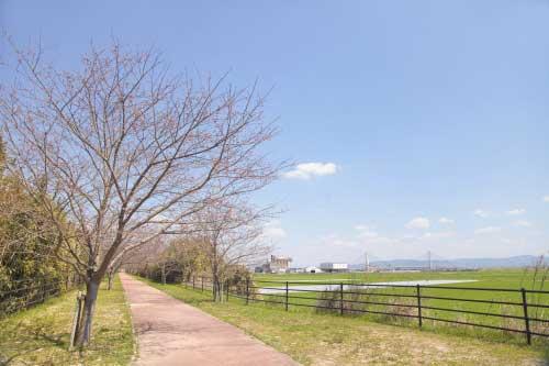 皿垣開の桜6