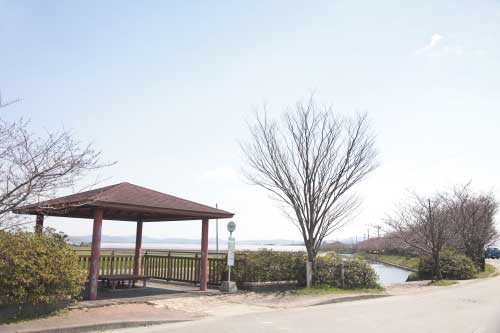皿垣開の桜2