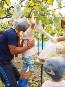 親子で巨峰収穫体験