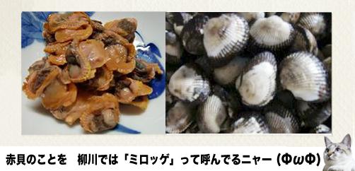 赤貝の佃煮16
