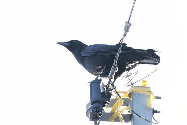 2017鳥_9